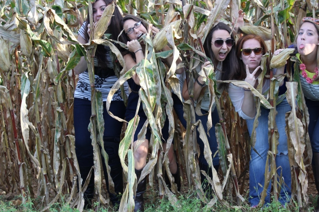 cornfields and friends