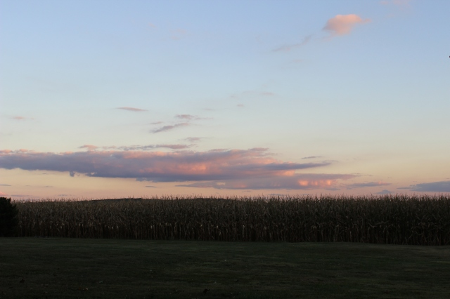 sunset cornfields