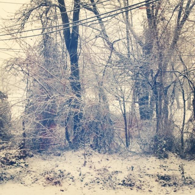 trees snow february